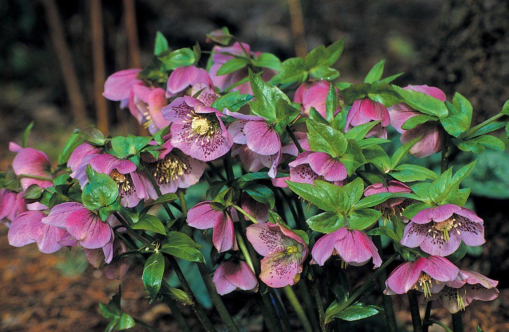 10 Plants With Great Winter Color