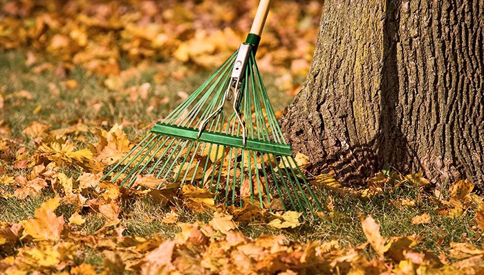Winterizing Your Garden In Portland Blessing Landscapes