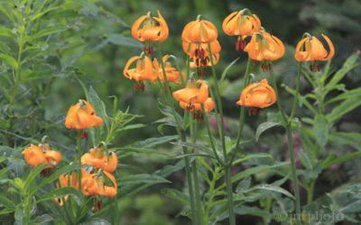 Flowers that Flourish in Portland