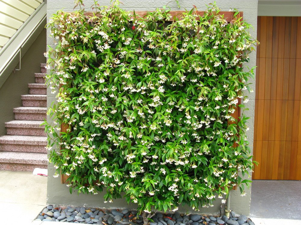 Best Plants For Privacy Screening That Don T Look Like