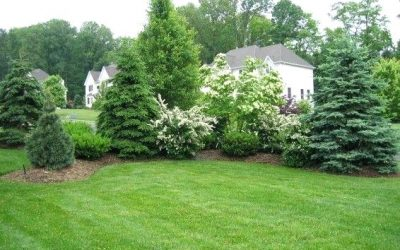 Best Plants for Privacy Screening (that don't look like Arborvitae)