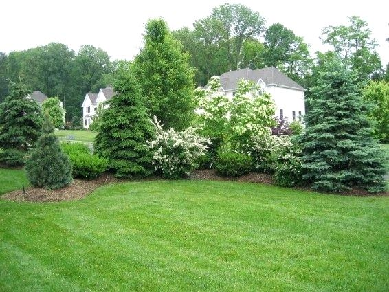 Privacy Landscape Plants Attractive Privacy Landscaping Ideas