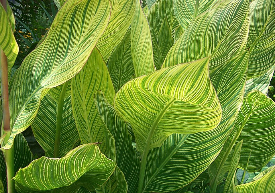 Fabulous Foliage Plants for Your Garden