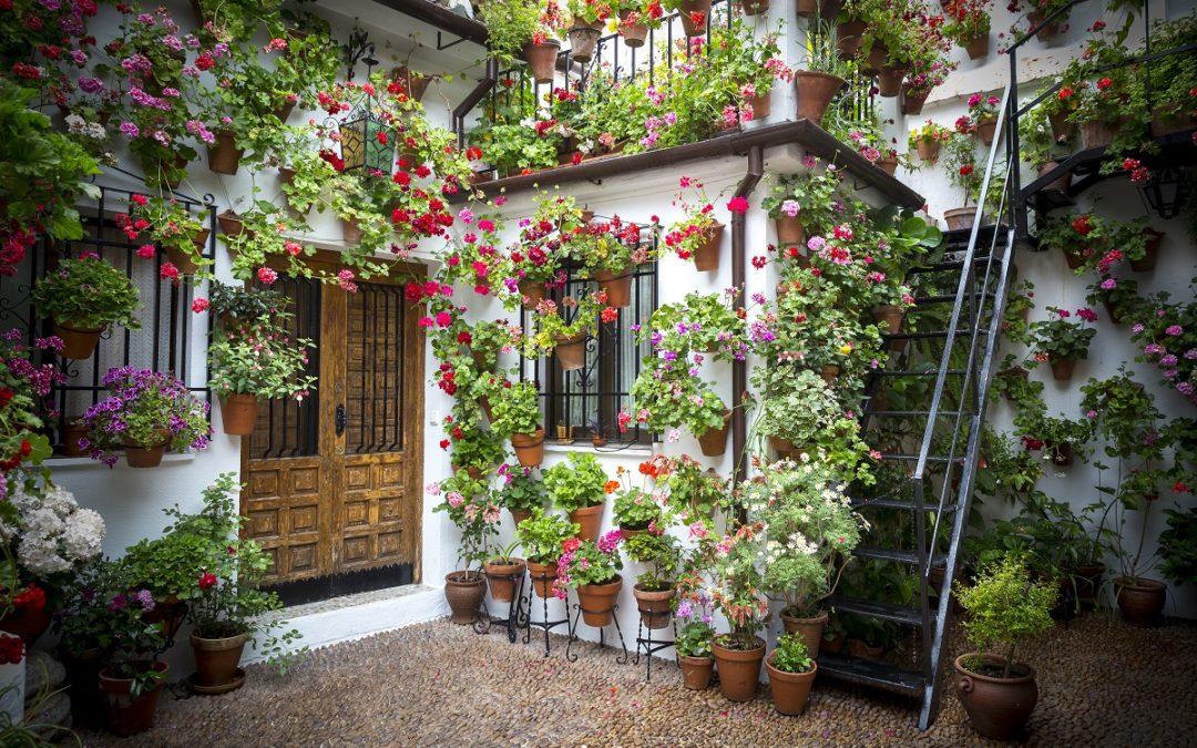 Maximize Your Space: Design Ideas for a Small Garden