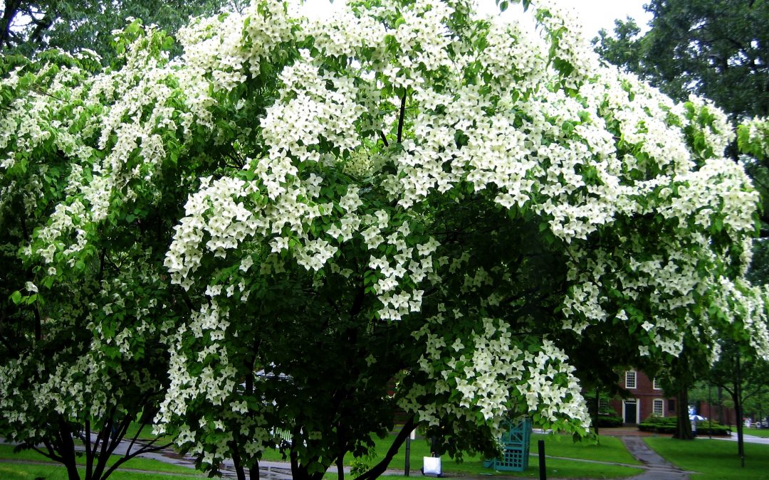 Top 10 Most Desirable and Disease-Resistant Trees