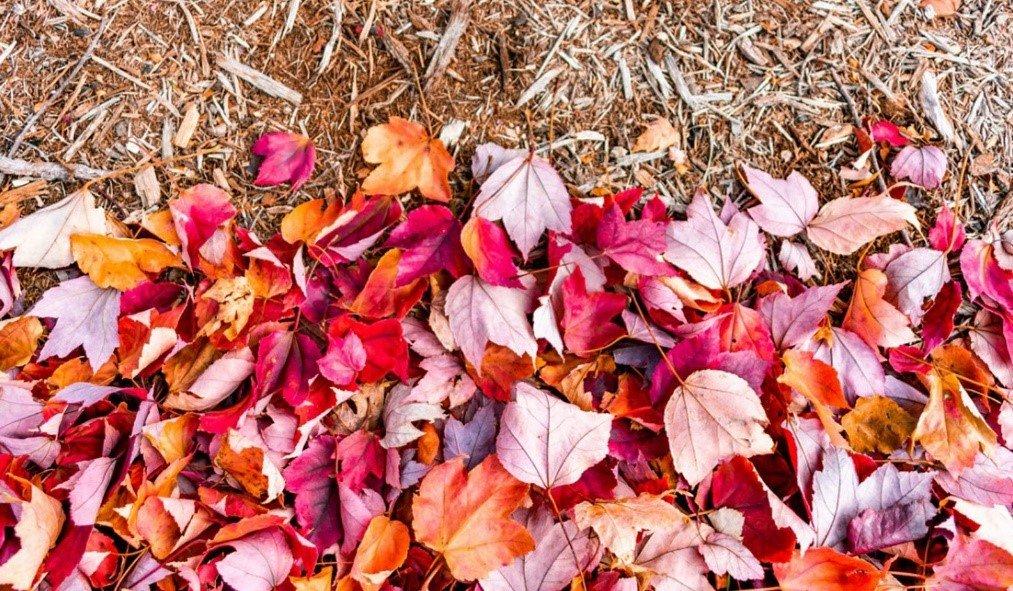 Rethinking Garden Cleanup