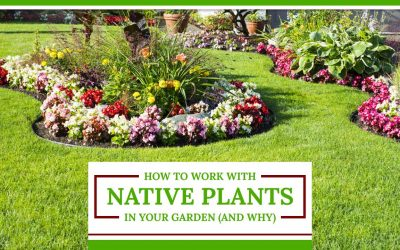 How to Work With Native Plants in Your Garden (And Why)